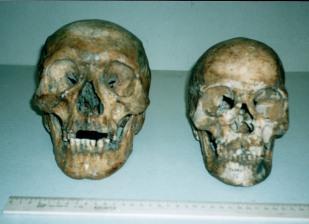 1 Skulls face m
