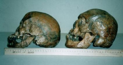 1 Skulls left side k