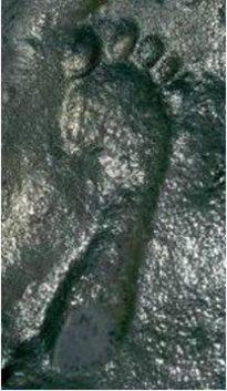 290 M yr ancient-footprint-594x1024