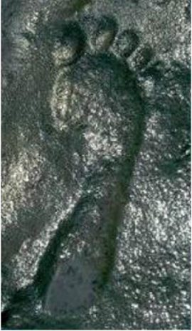 290 M yr ancient-footprint-594x1024