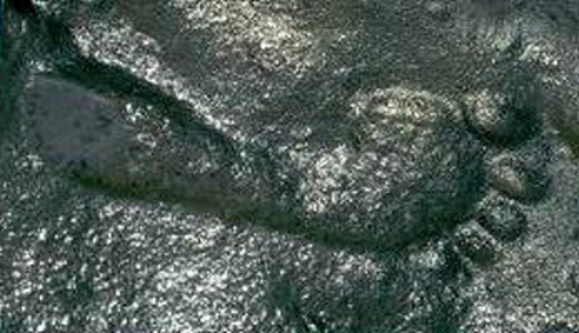 290-million-year-old-footprint-Ancient-Code1