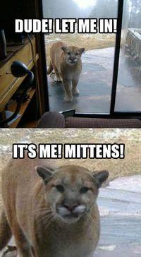 cougar joke