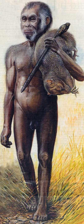 hobbitflores Homo Floresiensis