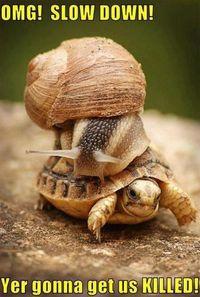 snail turtle