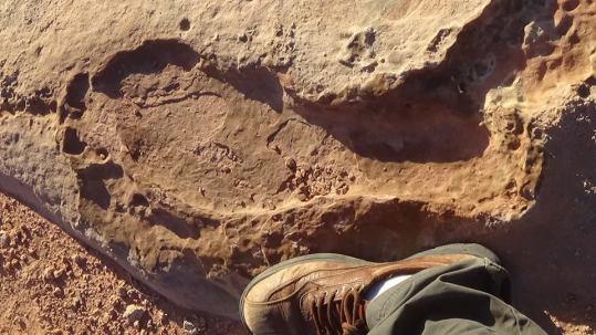 fossil 1 tuba