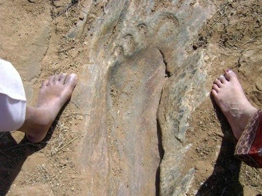 fossil 11 hanuman bangalore