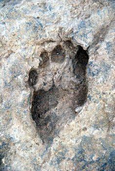 fossil 16 c kenya