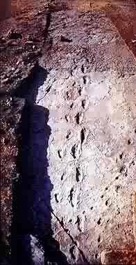fossil 16 e namibia