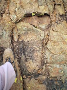 fossil 17 canada
