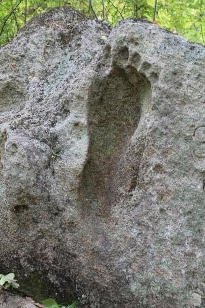 fossil 22 lazovski