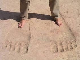 fossil 5 syria ain dara
