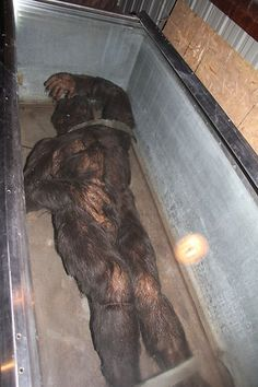 minnesota-iceman-bigfoot-sasquatch