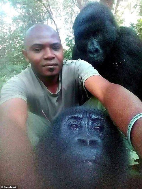 gorilla2-Virunga_National_Park_in_the_Democratic_Republic_of_Congo