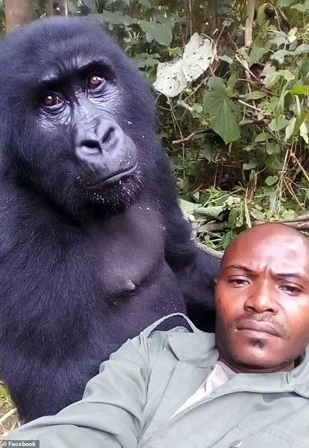 gorilla3-Patrick_Sadiki_