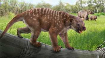 bunyip -extinct-marsupial-lion-climbed-trees