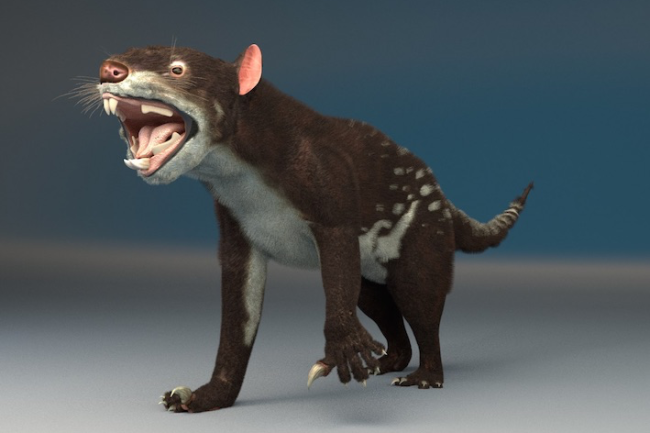 bunyip Leon_marsupial