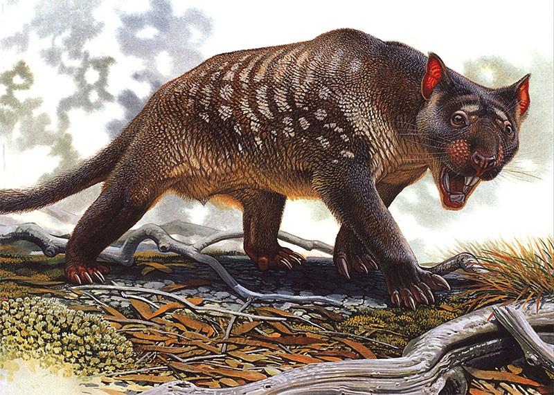 bunyip marsupial leon