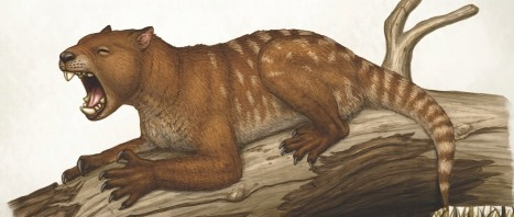 Thylacoleo carnifex, a marsupial and apex predator that lived in Australia.