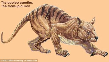 bunyip -The_lions_artists_impression_pictured_may_have_used_dens