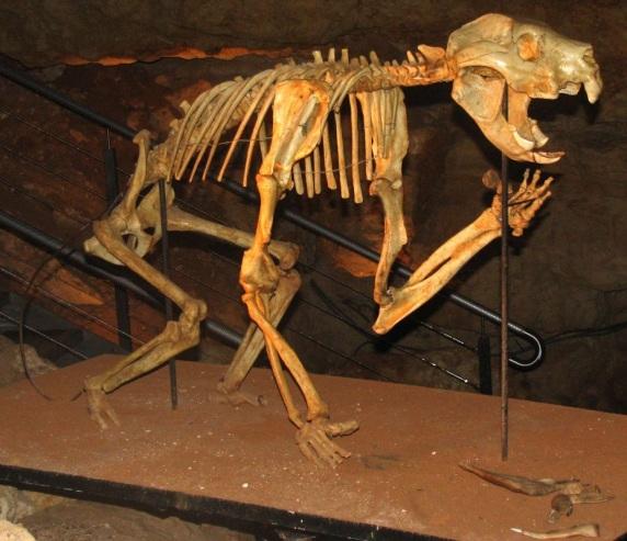 bunyip thylacleo carnifex
